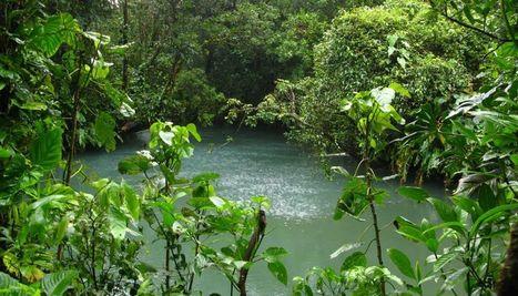 Quelle est la superficie mondiale des aires protégées au titre de la biodiversité ? - notre-planete.info | Sale temps pour la planète | Scoop.it