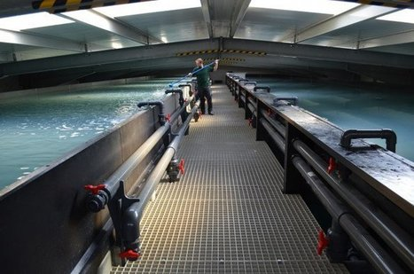 The future of European shrimp: land-based, sustainable and German | Fish Farming International | 3A : Actualités Aquacoles & Aquaponiques | Scoop.it