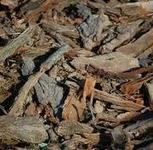 Why wood chips make the best organic mulch | Big Blog Of Gardening ~ organic gardening and organic lawn care | Trees of Margalla Hills | Scoop.it