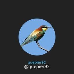 Mon année 2013 sur Twitter en vidéo ! | Nos Racines | Scoop.it