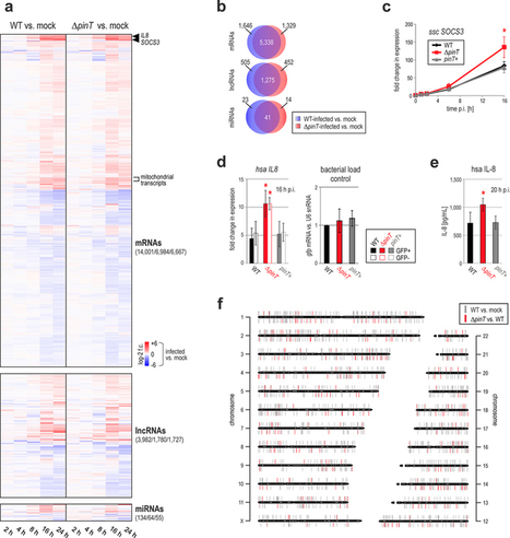 Dual RNA-seq unveils noncoding RNA functions in host–pathogen interactions | Amazing Science | Scoop.it
