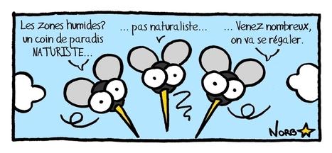 Sauvages du Poitou - Le bonheur est dans la prairie humide! | C@fé des Sciences | Scoop.it