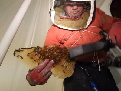 Watch 50,000 Honeybees Being Removed from Los Angeles Home (Video) | Vertical Farm - Food Factory | Scoop.it