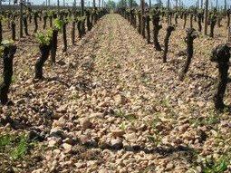 Complete All About Bordeaux Wine Guide to Bordeaux and its Wines | Planet Bordeaux - The Heart & Soul of Bordeaux | Scoop.it