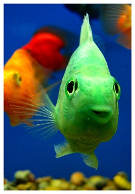 38+ Unique Photographs of Aquatic Life | Everything Photographic | Scoop.it