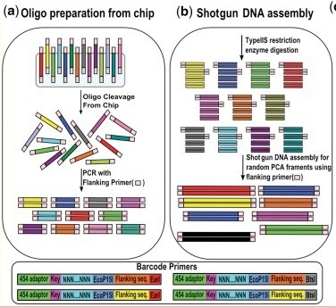 'Shotgun DNA synthesis' for the high-throughput construction of large DNA molecules | SynBioFromLeukipposInstitute | Scoop.it