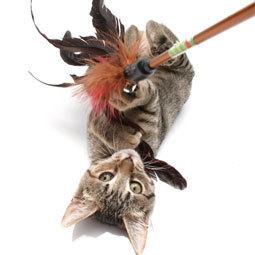 My Cat Bites Me. Why? | Pet News | Scoop.it