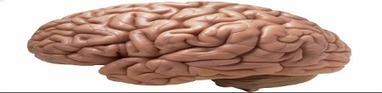 Brain Fact #4: Underweight People Risk Brain Shutdown | ZOXPro Training | Scoop.it
