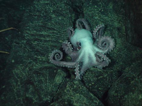 5 Marine Creatures of Hydrothermal Vents | Biblioteca CCBA | Scoop.it