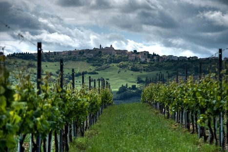 Verdicchio, an Italian white wines to ask for | Wines and People | Scoop.it