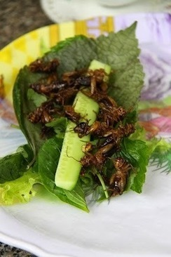 Glenn Cardwell: Entomophagy - dining on insects | Interesting Insects | Scoop.it