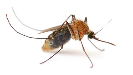 Why do mosquito bites itch? | Weight Loss and Fitness | Scoop.it