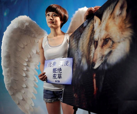 White Wolf: More Chinese Celebrities speak out against Animal ... | Animals R Us | Scoop.it