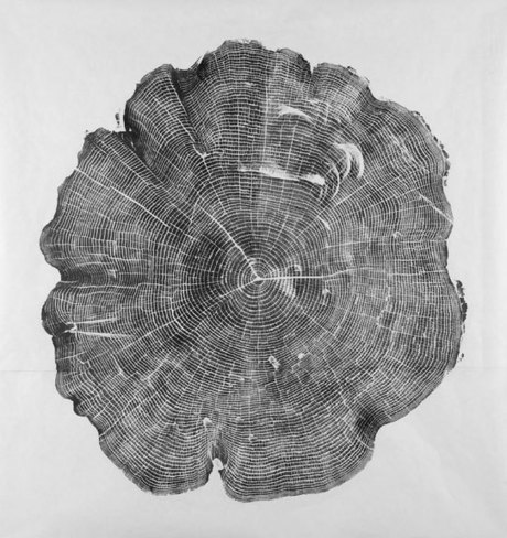 Covered in Ink, Cross-sections of Trees Make Gorgeous Prints | Nature as a substrate:  art and craftwork | Scoop.it