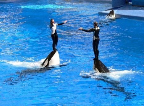 Pt. Dume Cancels Annual SeaWorld Trip Amid Controversy | Scuba Education | Scoop.it