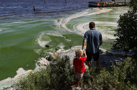 Slimy Green Beaches May Be Florida's New Normal | Farming, Forests, Water, Fishing and Environment | Scoop.it