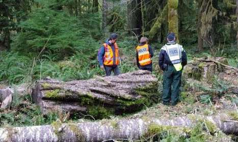 Genetic profiling of trees helps convict timber thieves | Timberland Investment | Scoop.it