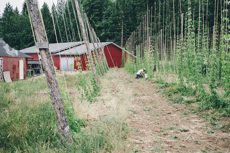 From Farm to Bottle: This Brewery Combines Beer and Agriculture - Modern Farmer | Permaculture, Horticulture, Homesteading, Bio-Remediation, & Green Tech | Scoop.it