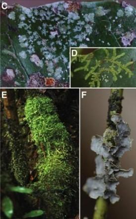 Un vegetal que se ha apropiado de mucho y muy distinto ADN ajeno | La célula | Scoop.it