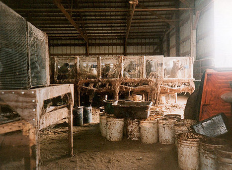 Fur | Liberation BC | Animal Abuse. | Scoop.it