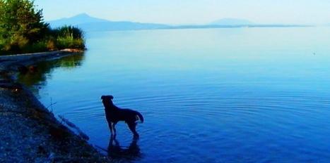 Cannes : Godard est un chien | CaniCatNews-actualité | Scoop.it