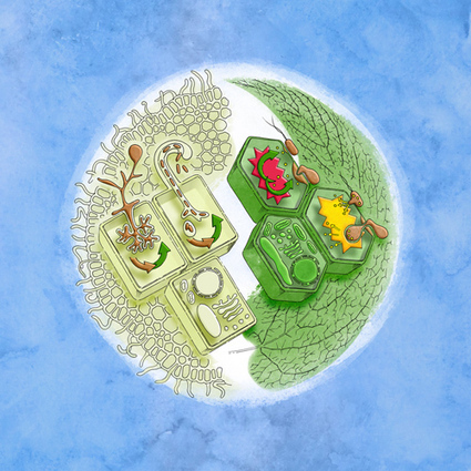 36th New Phytologist Symposium: Cell biology at the plant–microbe interface | Plant Genomics | Scoop.it