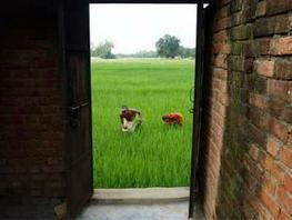 7 companies with over-average rural exposure fare better in stock market - Economic Times | Local Economy in Action | Scoop.it