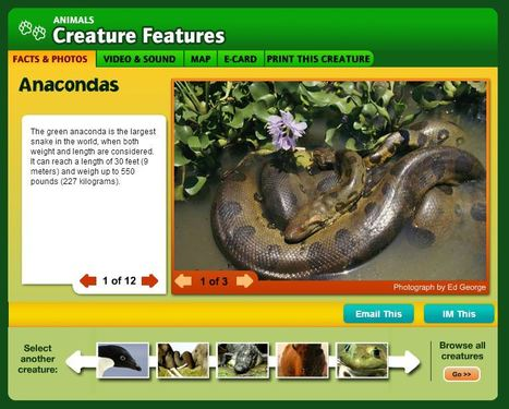 Anaconda Facts and Pictures -- National Geographic Kids | Edu-Curator | Scoop.it