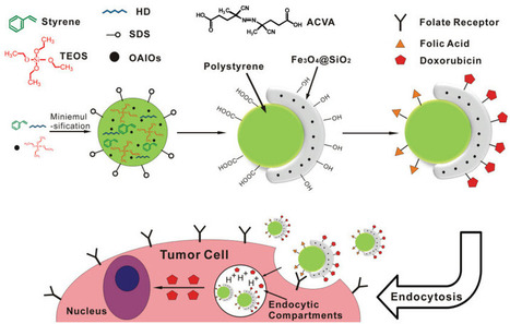 A multifunctional nano carrier to detect, diagnose, and deliver drugs to cancer cells | KurzweilAI | Biology | Scoop.it