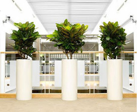 Indoor Plants Melbourne: Apply Indoor Plants on Your Commercial Space to Increase the Business | Inscape Indoor Plant Hire | Scoop.it
