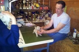 Elevage des Elucines - pension et élevage pour chien | Etre visible sur le web | Scoop.it