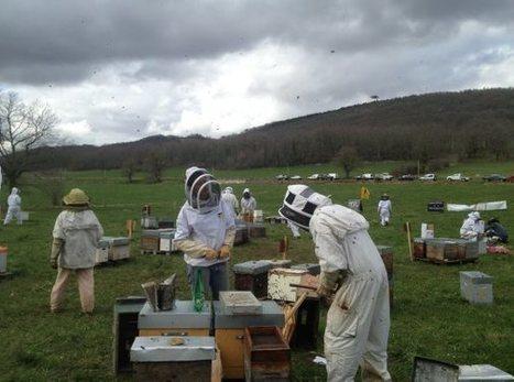 Des apiculteurs ariégeois en visite dans le Gers | Services vétérinaires | Scoop.it