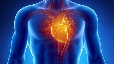 Cardiac cells and gold nanofibers join forces to heal damaged hearts | Longevity science | Scoop.it