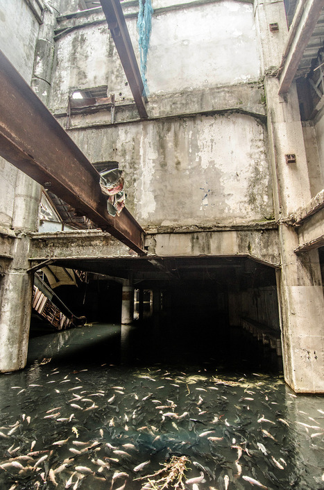 An Abandoned Bangkok Shopping Mall Hides a Fishy Secret | The audience left 20 years ago | Scoop.it