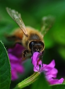 What Investors Can Learn From Honeybees - Forbes   KNOWING.............   Scoop.it