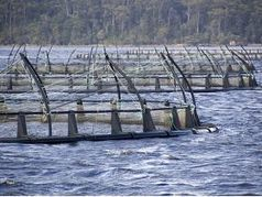 Farmed and Wild Fish in a Moment of Harmony | Aquaculture Directory | Legal Issues - Marina and Ports | Scoop.it