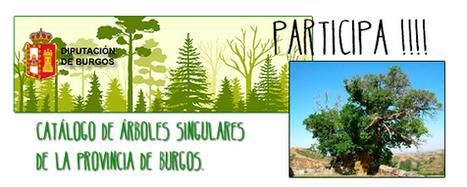 Ayudanos a elegir los árboles singulares de la provincia de Burgos | Actualidad forestal cerca de ti | Scoop.it