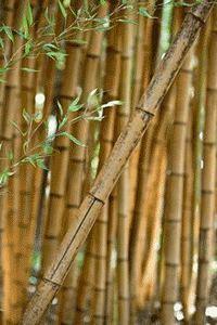 La Bambouseraie de Prafrance | TPE Bambou | Scoop.it