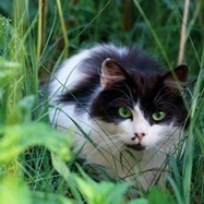 Lyme Disease in Cats: Sometimes the Vets Are Wrong - Catster | Cats | Scoop.it