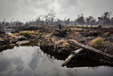 Palm oil now biggest cause of deforestation in Indonesia | Palm Oil | Scoop.it