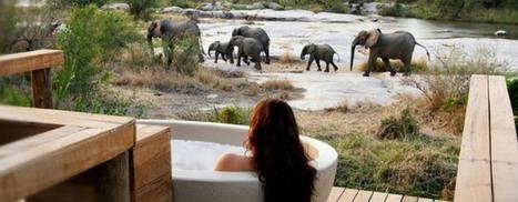 Wildlife Tours | Wildlife cruises | Scoop.it