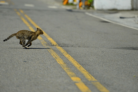 Tiny Animals on Fingers | Photography | Scoop.it