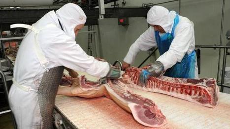 Porc : retour sur 18 mois de crise de l'élevage - Ouest france | Agriculture en Pays de la Loire | Scoop.it