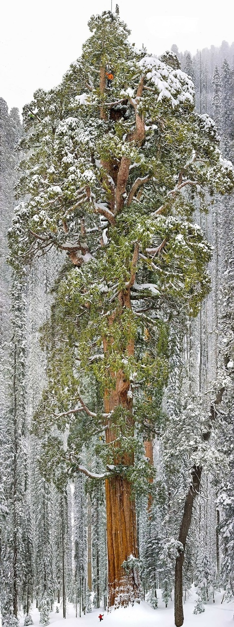 Les 16 arbres les plus spectaculaires du monde | The Blog's Revue by OlivierSC | Scoop.it