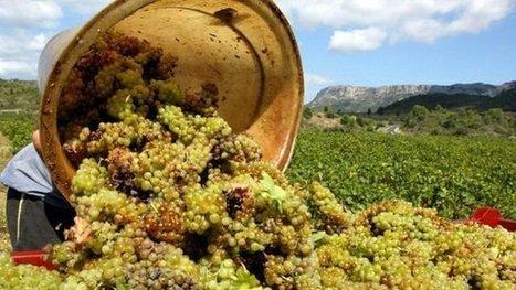 La réglementation sur le vin change, le Languedoc-Roussillon pourrait-il être affecté ? - France 3 Languedoc-Roussillon   Vignes et vins   Scoop.it