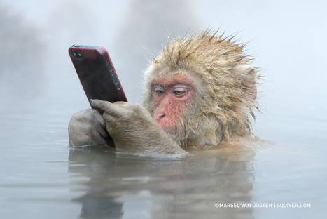 The Story Behind This Incredible Photo Of A Monkey Using An iPhone | Photographique | Scoop.it