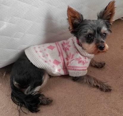 Paws Couture | Dog Boutique for Special Hounds | Couture, tricot et broderie - idées et envies | Scoop.it