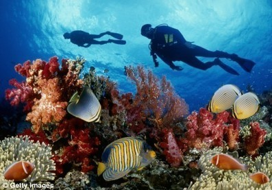Great Barrier Reef facing destruction 'within 20 years' say experts | Sustainable Tourism | Scoop.it