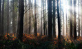 This Should Be a No-Brainer !!! Managing English woodlands could help rare plants, report finds | Biodiversity IS Life  – #Conservation #Ecosystems #Wildlife #Rivers #Forests #Environment | Scoop.it