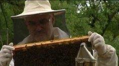 Drôme : des abeilles sous surveillance - Francetv info | Abeilles, intoxications et informations | Scoop.it